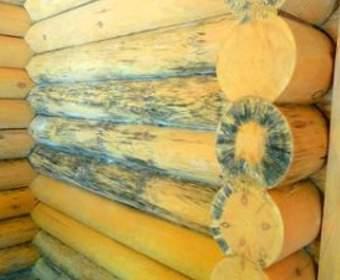 Как защитить стены из древесины от грибка