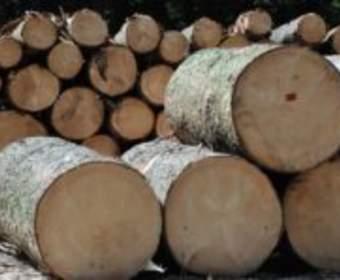 Заготовка леса для строительства дома из бревна